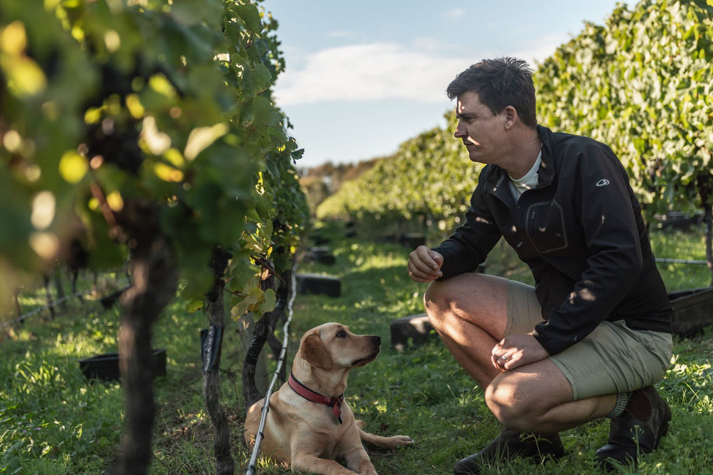 Meet Stu Marfell – Chief Winemaker at Vavasour
