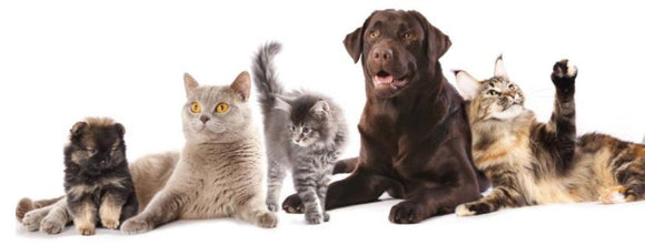 Pet Lovers | Instant Essentials cats , dogs gifts