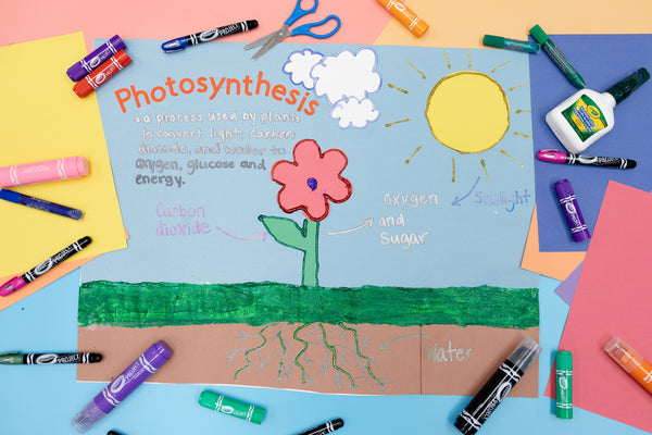 School Project, Crayola Project Photosynthesis Board