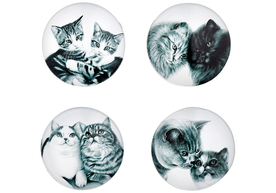 ASHDENE Feline Friends Assorted 4pk Magnet