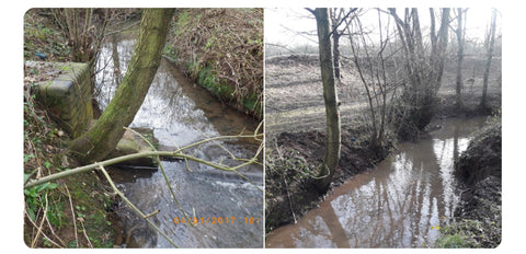 salmon in the stour before and after