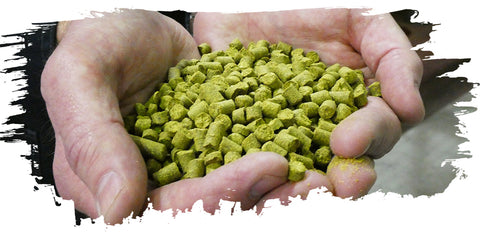 Hands Holing Hop Pellets for Brewing Beer