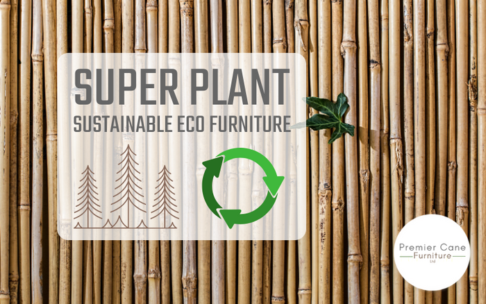 Cane and Rattan Furniture – How these 'Super Plants' Can Help Save the Planet
