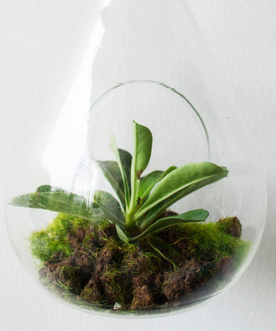 Hanging Bird Nest Terrarium
