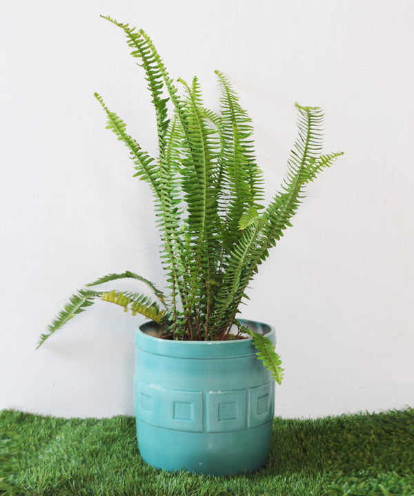 Gili Green Planter