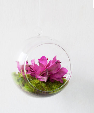 Hanging Bubble Terrarium
