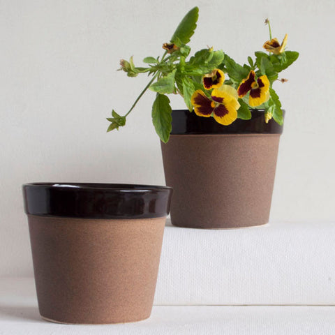 Chocolate Mush Planter