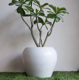 Pure Potter's Wheel Planter