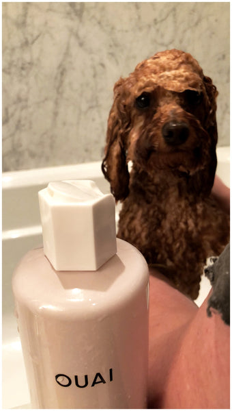OUAI Turns 3 OUAI Pet Shampoo