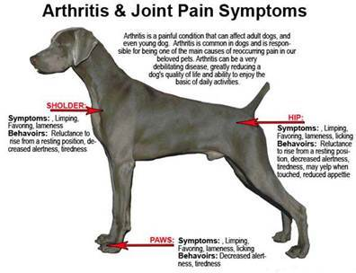 What are Dog Arthritis Supplements?