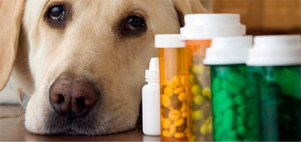 Dog Joint Supplements for Arthritis