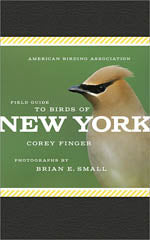 Birds of New York