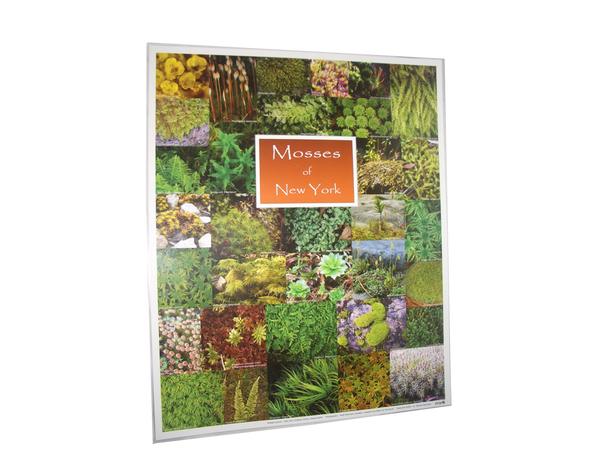 Laminated Moss Poster