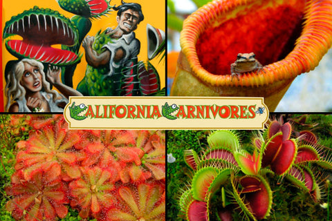California Carnivores Postcard