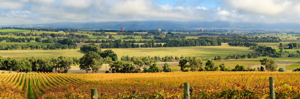 YarraLoch - taking the long, long road to great Yarra wine