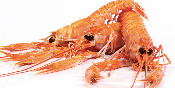 Frozen Whole Mozambique Langoustine (Scampi) Size M, price per 1.5kg box