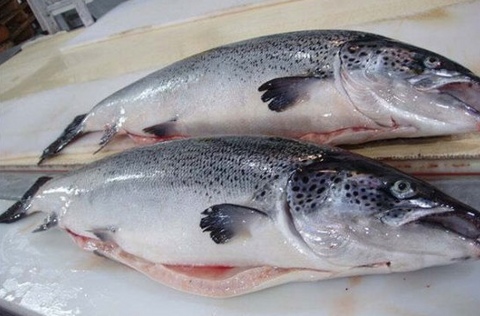 Fresh King Salmon (Chinook) Whole Fish (cleaned gilled & gutted), approx 3250g, price per fish