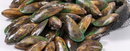 New Zealand Greenshell Mussels (Full Shell) 907g, price/pack, frozen