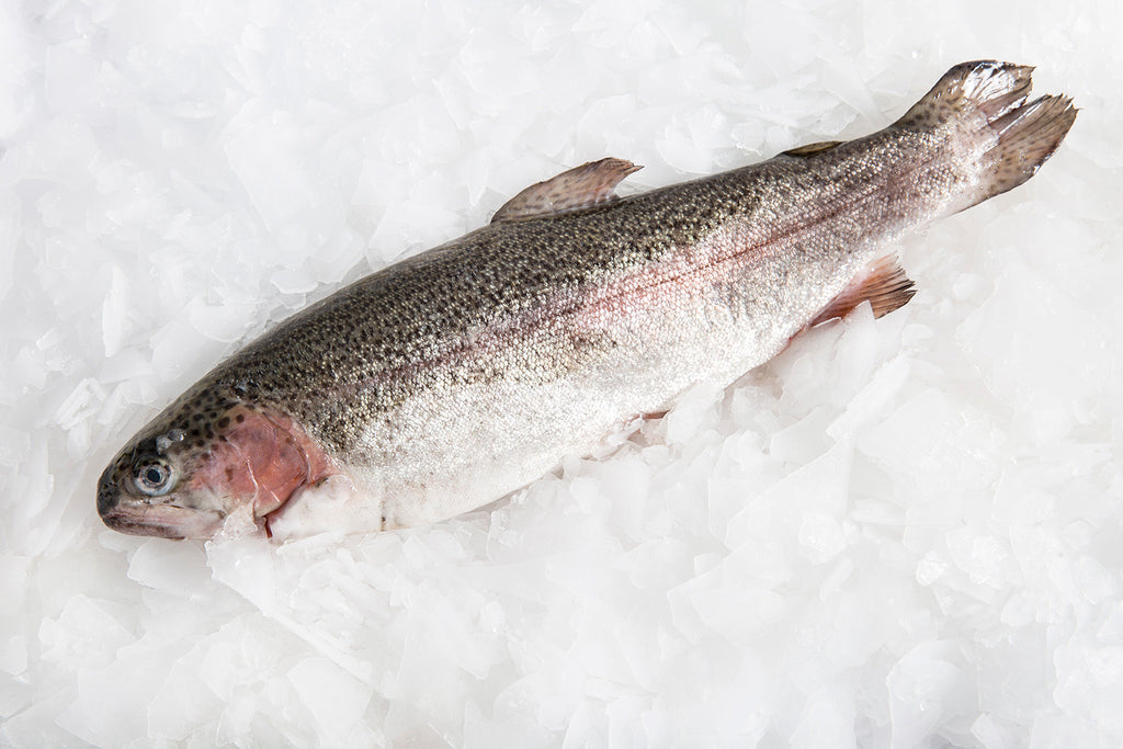 Trout (Rainbow) Whole Fish (cleaned gilled & gutted), 1025g, price/fish, frozen