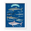 I Love Sharks! Art Print