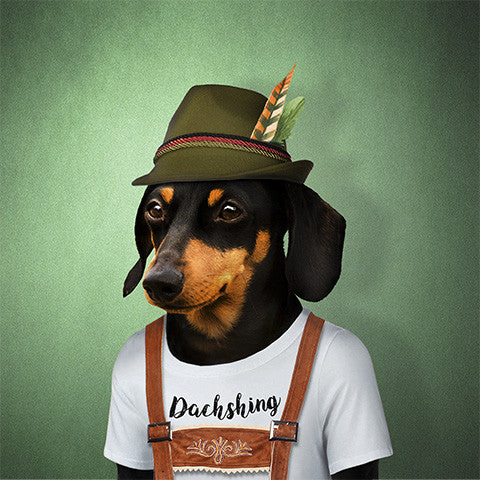 Sausage Dog Collection