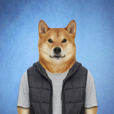 Shiba Collection