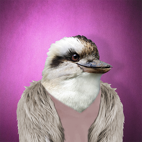 Kookaburra Collection