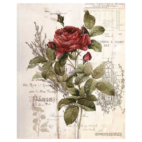 Botanical Rose - Prima ReDesign Decor Transfer - Renaissance Lady - Connie S. Hill