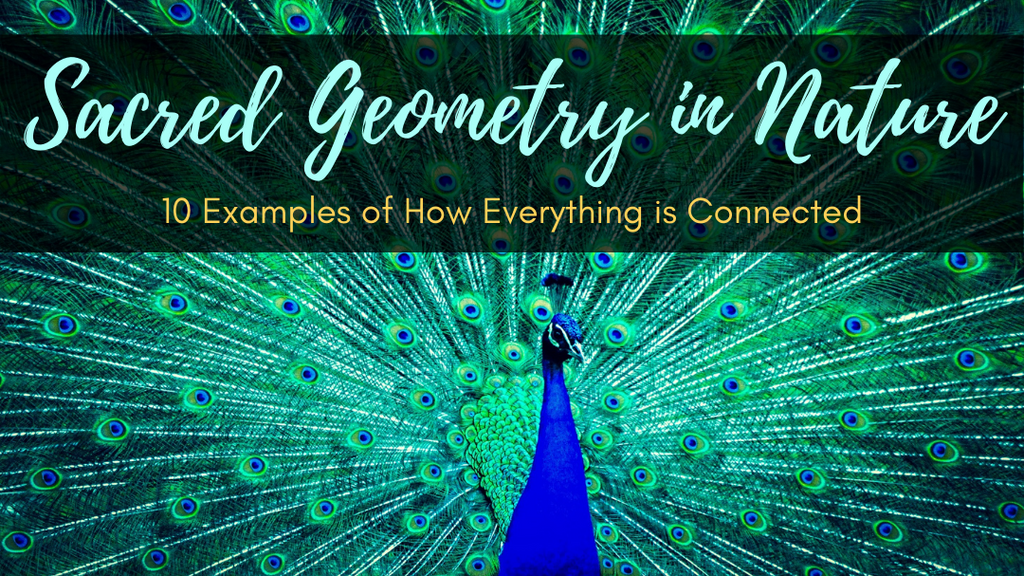 Sacred Geometry in Nature: 10 Examples of How Everything is Connected