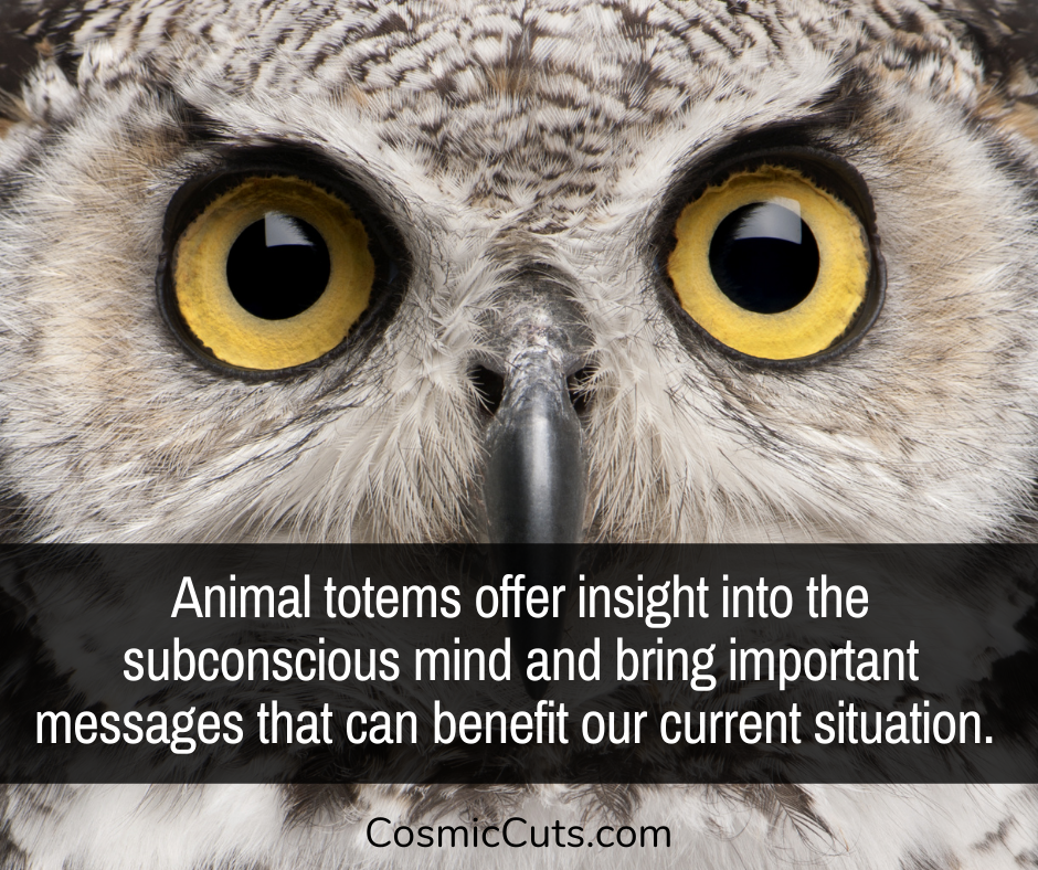 How to Find Your Animal Totem
