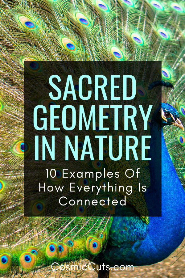 Sacred Geometry and Nature