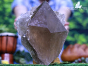 Huge Dark Smoky Quartz Point 9.00 High Quality Beacon of Strength QQ-66s
