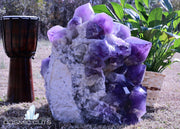 Huge Bolivian Amethyst Geode 18.75 Spectacular Quality Rare Mineral ZZ-23s