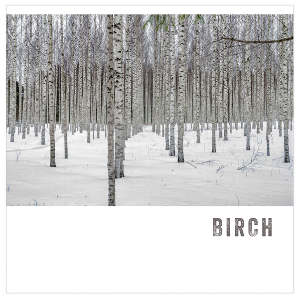Birch Playlist by Dana Brandwein of DBO HOME