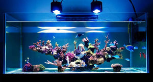 LED Aquarium Lighting in a Reef Tank & How to Select the Right One
