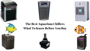 Best Aquarium Chiller Reviews - What To Know Before You Buy
