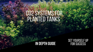 Best CO2 System for Planted Aquarium – (2019 Reviews)