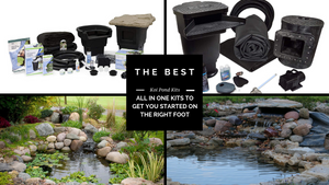 Best Koi Pond Kits - Start Your Koi Pond Right With These Reviewed Kits (2019 Update)