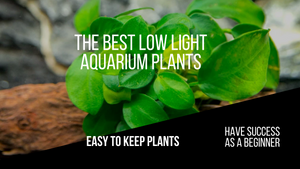 Best Low Light Aquarium Plants - Making An Easy to Keep Planted Tank