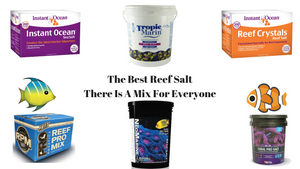 Best Reef Salt Mix - Choosing the Best Salt For Your Tank