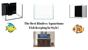 Best Rimless Aquariums - Fish Keeping In Style!