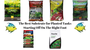 The Best Substrate for Planted Tanks – 2019 Reviews & Guide