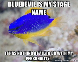 Damselfish - Yes, Sane Damsels Do Exist!