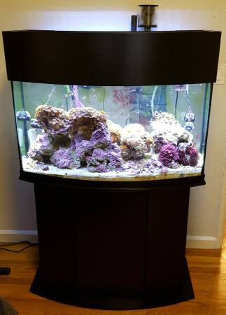 Cheap Fish Tanks 5 Tips To Get You The Best Deal