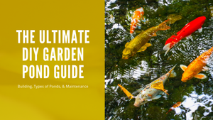 The Ultimate DIY Garden Pond Guide - Building, Types of Ponds, & Maintenance