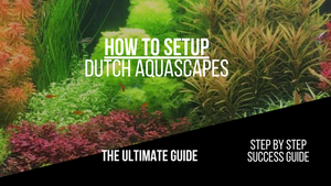 Dutch Aquascape - How To And Guide On Dutch Style Aquariums