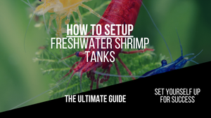 How to Set up a Freshwater Shrimp Tank: The Ultimate Guide