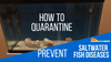 How To Quarantine Fish