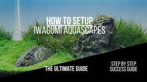 Iwagumi Aquascape - How To and Guide