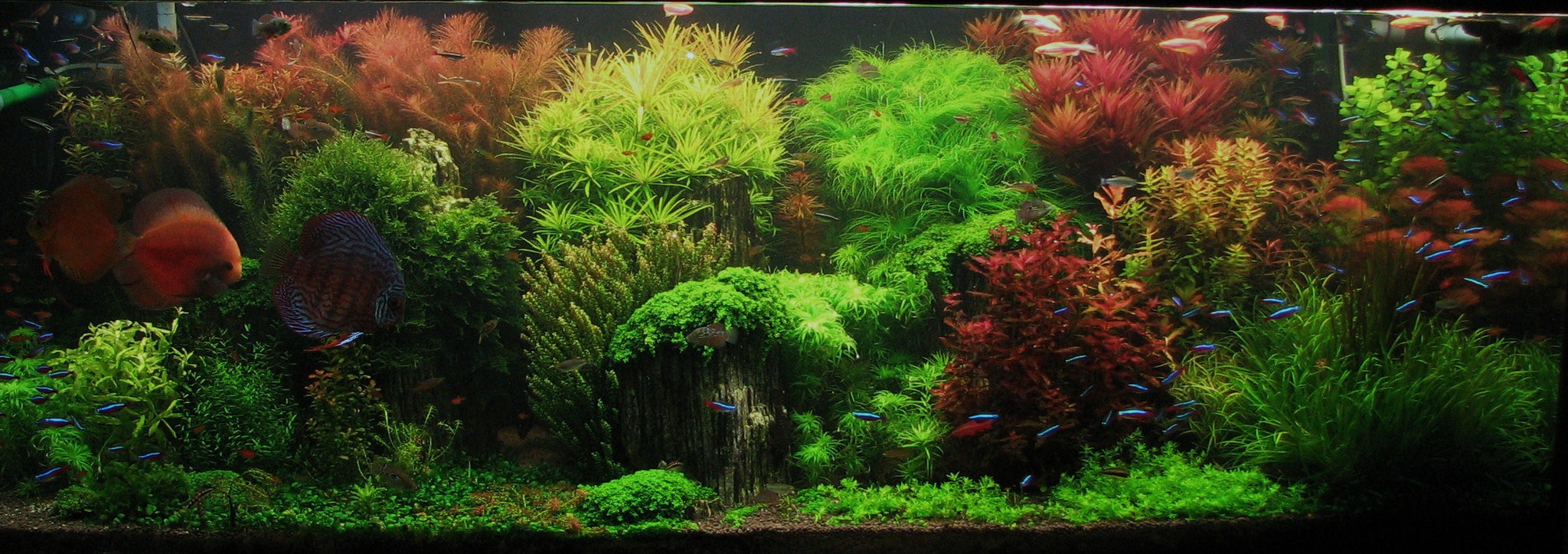 Charmant Top 5 Modern Aquascaping Designs For Your Freshwater Fish Aquarium